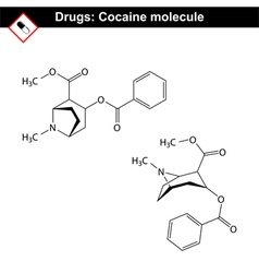 Cocaine - natural drug vector