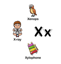 alphabet letter x-xenops x-ray xylophone vector image vector image