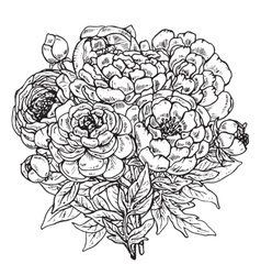Hand drawn peony flowers bouquet vector image
