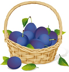 basket with plums vector image