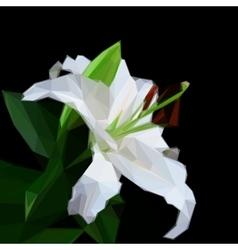 flowers lily on black background Flower symbol vector image