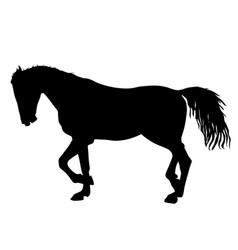 Silhouette black mustang horse vector
