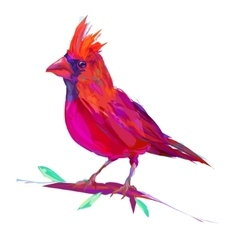 The cute red cardinal exotic bird vector