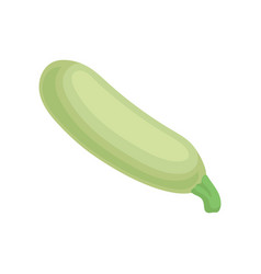 flat icon of zucchini or courgette organic vector image