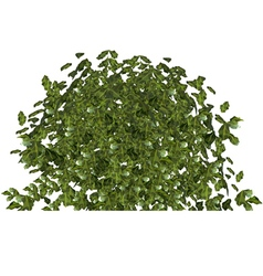Plant green bushy shrub vector