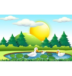 Three ducks in the pond vector image