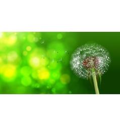 Dandelion on blurred green bokeh background vector image vector image