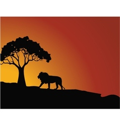 lion silhouette vector image vector image