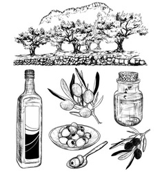 Hand Drawn Set of Olive Products vector image vector image