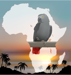 African map with background and Grey Parrot vector image