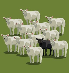 Animal sheep black on green vector image