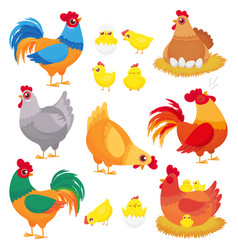 cute domestic chicken farm breeding hen poultry vector image