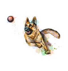 German shepherd dog playing vector