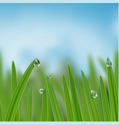 Grass in droplets water seamless border vector