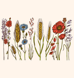 wild flowers with leaves set wedding botanical vector image