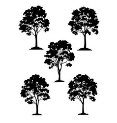 maple trees and grass silhouette vector image