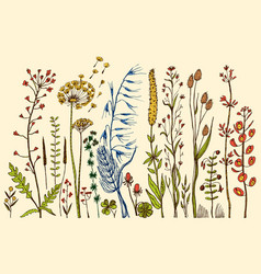wild flowers with leaves set of wedding botanical vector image