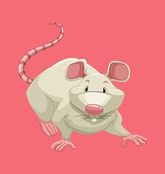 White rat on pink vector