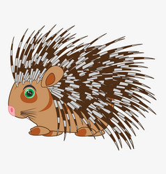 Animal porcupine on white background is insulated vector