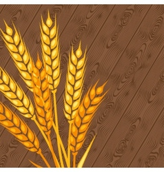 Background with ears wheat vector