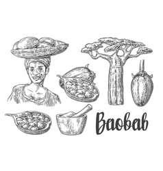 Baobab fruit tree and seeds Mortar and pestle vector