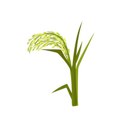 Flat icon of green millet fast-growing vector