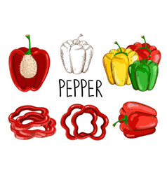 pepper isolated on white background vector image