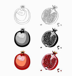 set pomegranate cut garnet vector image