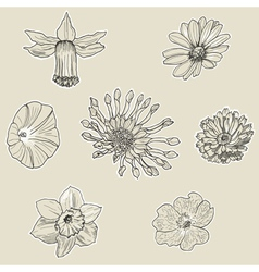 Set of seven graphic flowers vector image vector image