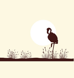flamingo beauty landscape silhouettes collection vector image