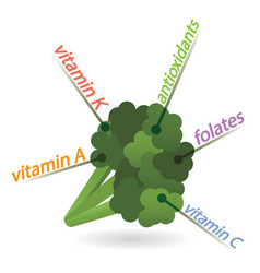 Broccoli content properties and benefits vector