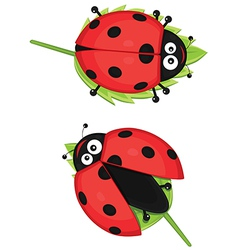 Cute ladybug vector image