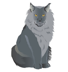 Maine coon cat breed vector
