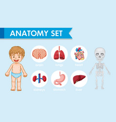 Scientific medical human anatomy vector
