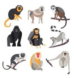Set of Apes and Monkeys vector