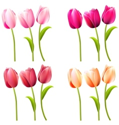 Some realistic tulips on white vector image
