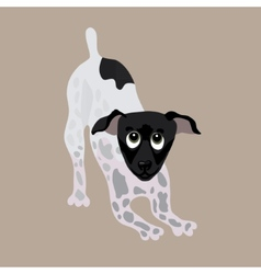 Japanese Terrier of a dog vector image