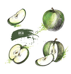 apple hand drawn set vector image