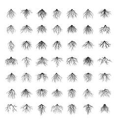 Big set of black roots vector