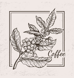 Coffee berries twig icon vector