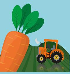Farm fresh vegetables carrot product vector