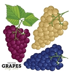 Grape Set vector