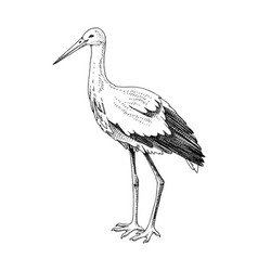 hand drawn stork vector image