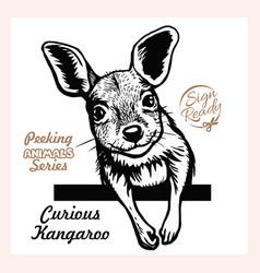 peeking funny kangaroo - funny kangaroo vector image