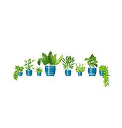 Set of different plants in flowerpot vector