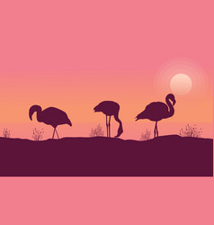 scene flamingo at sunrise collection vector image
