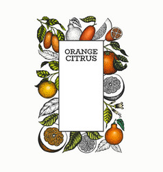 Citrus design template hand drawn colour fruit vector