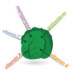 Kale content properties and benefits vector