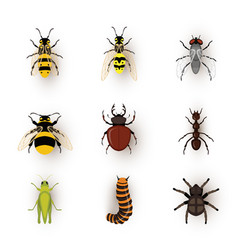 Various insects flat set vector
