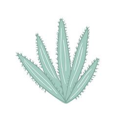 Aloe cactus in doodle style cute prickly green vector